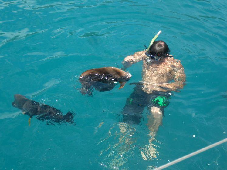 whitsundays-15-hook-island